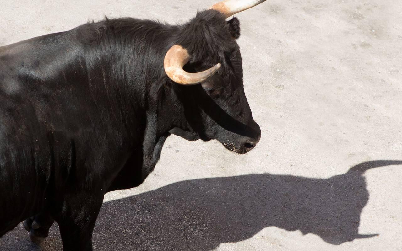 Bull in the sand, luxury stay in provence saint remy de provence, Le Vallon de Valrugues & Spa.