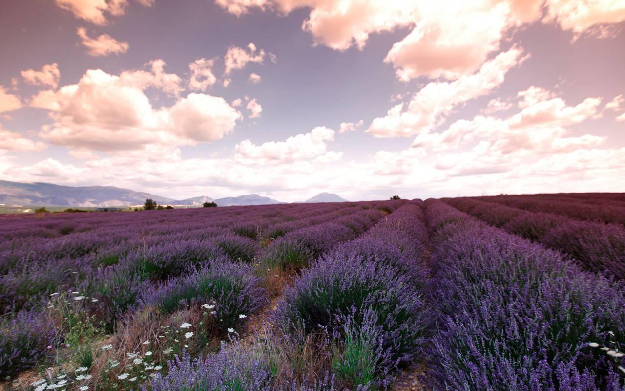 Flowery landscape vallon de valrugues