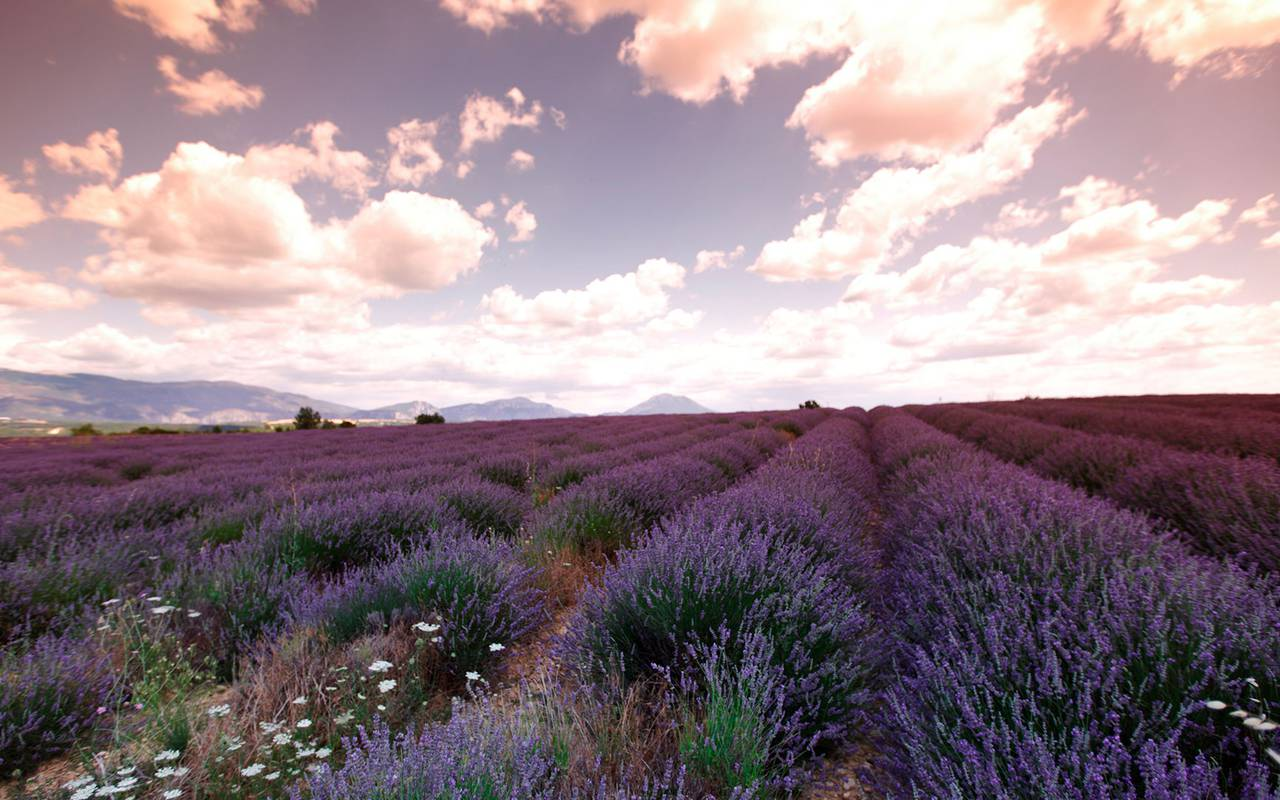 Lavender landscape at sunset, luxury stay in provence saint remy de provence, Le Vallon de Valrugues & Spa.